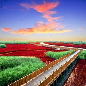 La plage rouge à Plajin - Chine