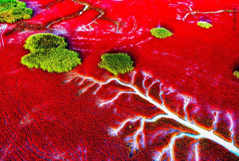 La plage rouge à Planjin - Chine
