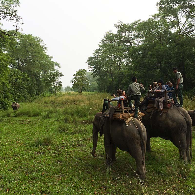 Chitwan elephants rhinoceros - Apogée Voyages
