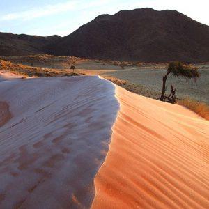 Tok Tokkie Trails Namibie - Apogée Voyages