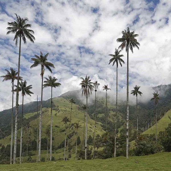 Vallée de Cocora - Colombie - Apogée Voyages