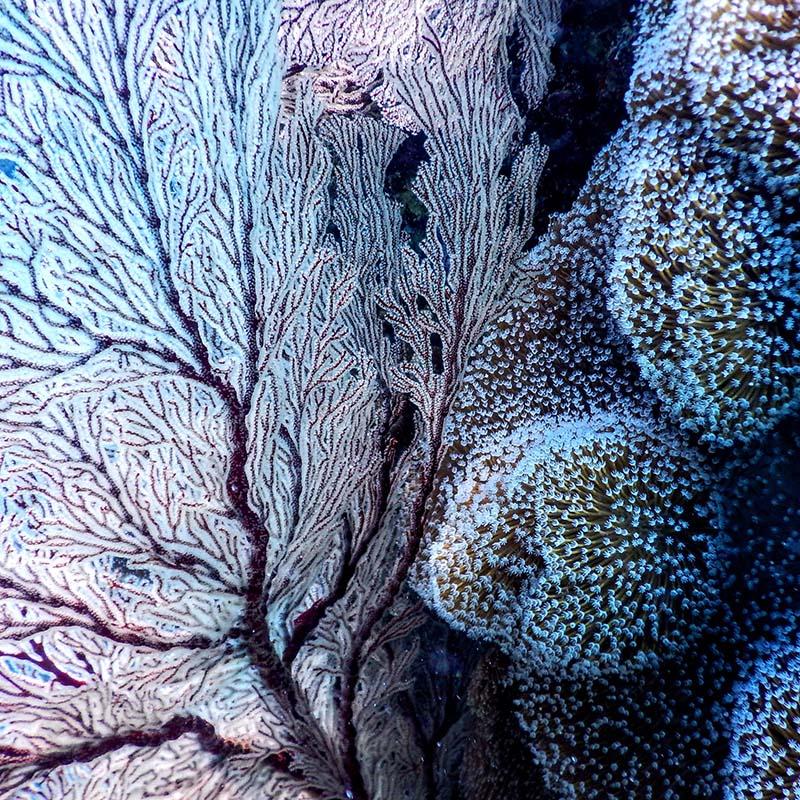 japon okinawa blue coral - apogée voyages