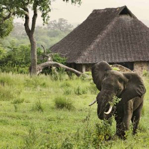 Itinéraire parc Sélous Zanzibar Tanzanie - Apogée Voyages
