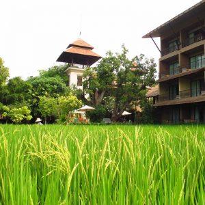 Siripanna villa resort & spa - Chiang Mai - Thaïlande - Apogée Voyages