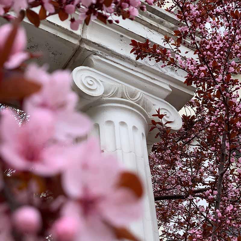 National Cherry Blossom Festival : les meilleures expèriences Apogée Voyages
