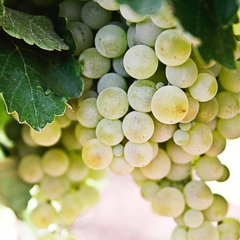 meilleurs vins georgiens - apogee voyages