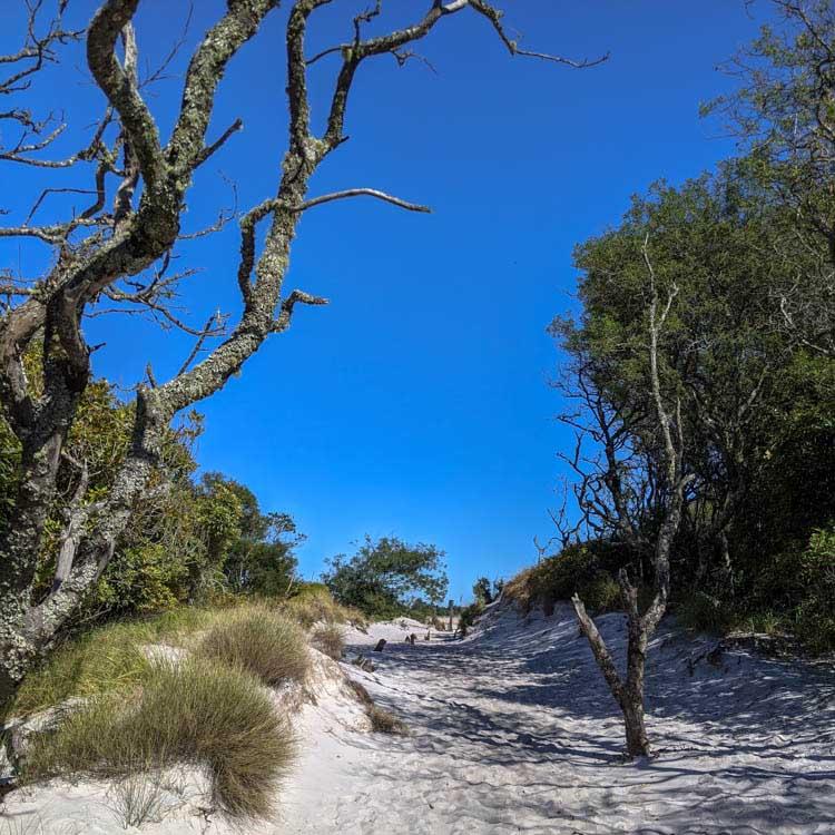 : Randonnée sur la Montagne de la Table Afrique du Sud - Apogée Voyages
